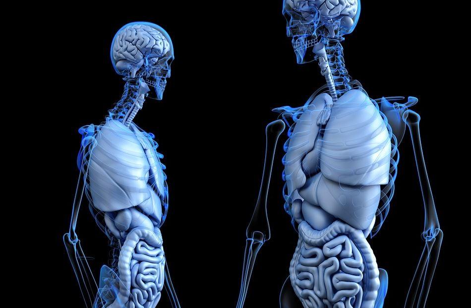 24hGold - L'exosquelette médic...