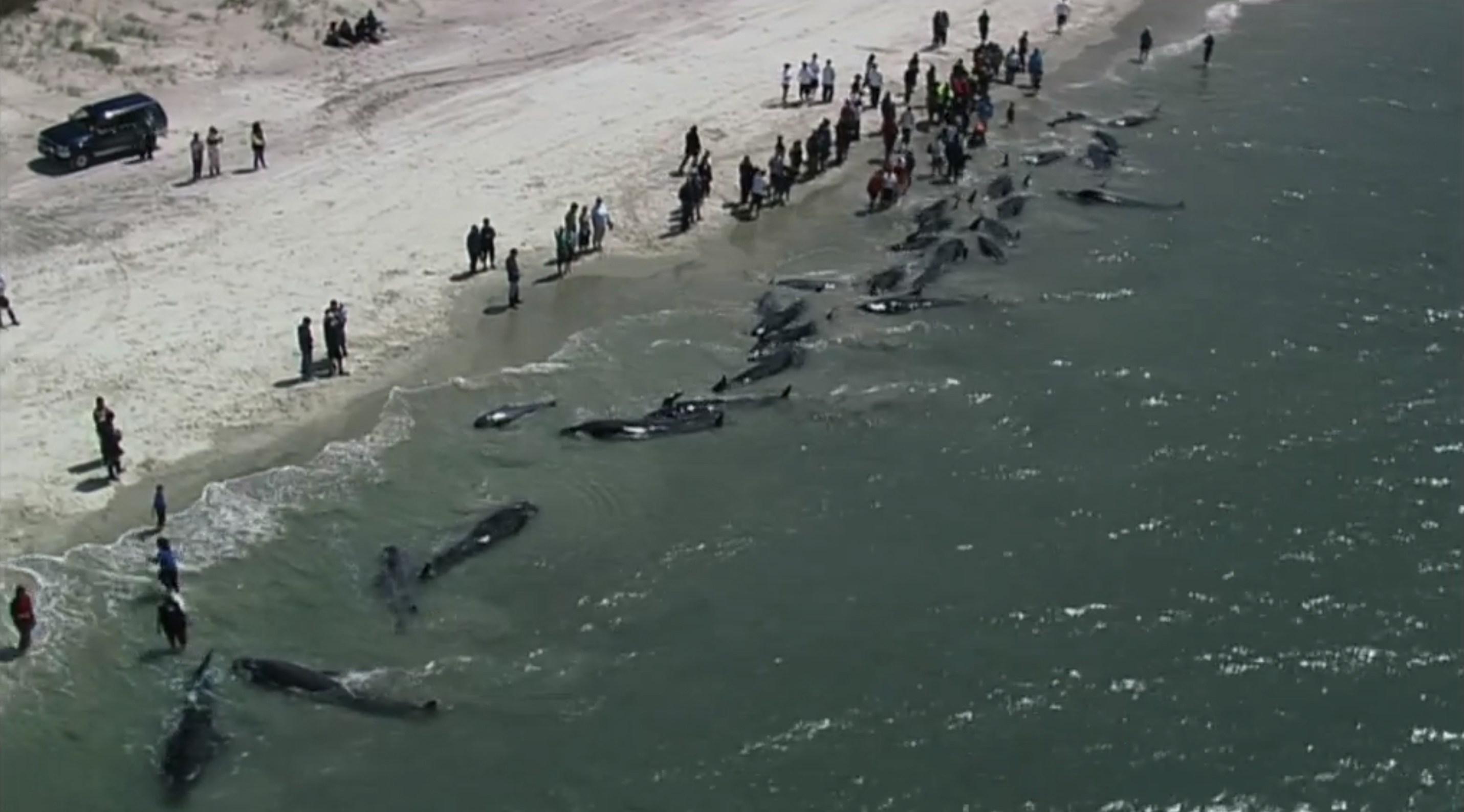 24hGold - Les mers polluées en...